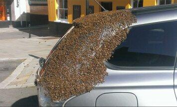 HÄMMASTAV: Mesilasparv jälitab autot 2 päeva, et päästa lõksus olnud mesilasema