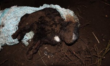 УЖАСАЮЩИЕ ФОТО: Новый владелец дома обнаружил в холодильнике мертвых кошек