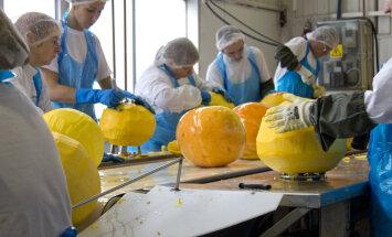 Põltsamaa Felix закатает в банки 900 тонн тыквы