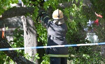 Murdunud puu Tõnismäel