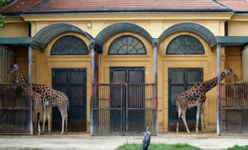 Mati Kaalu lemmik: Schönbrunni loomaaed Viinis