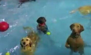 VIDEO: Koerte basseinipeoklippi on Facebookis vaadatud enam kui 18 miljonit korda