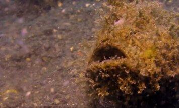 Müstiline olend: Hämmastavad kaadrid karvasest ookeanisügavustes tegutsevast kalast