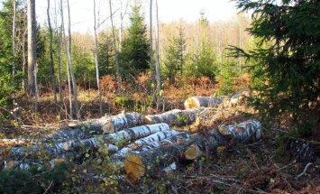 Leili metsalood: Kui kased vanaks saavad