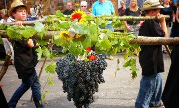 16 ноября — праздник молодого вина Божоле Нуво
