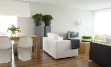 Paranda potililledega õhukvaliteeti: kui palju taimi selleks kodus olema peaks?