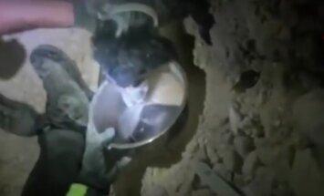 VIDEO: Õnnelik lõpp! Päästekoer nuusib Itaalia maavärina rusude vahelt välja lootusetult kinni jäänud koera