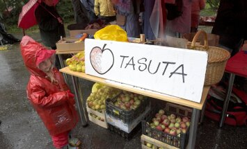 Вся страна заготавливает яблоки. И обзор цен на рынках