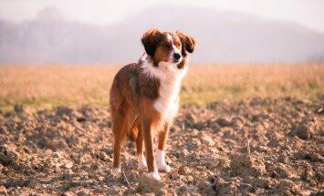 SUUR LEMMIKLOOMAHOROSKOOP: Millise loomakese peaksid endale võtma?