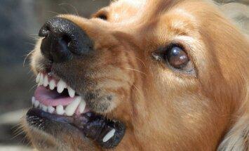 GRAAFIK: Kas koer on valmis ründama või tahab hoopis rahu? Vaata, mida ütleb koera kehakeel tema meeleolu kohta