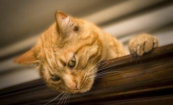 """6 põnevat nutitelefonirakendust tänase """"kallista oma kassi"""" päeva tähistamiseks"""