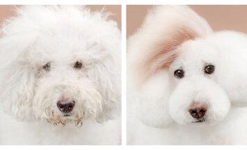 FOTOD: Vaata, millise suure muutuse teevad läbi need armsad neljajalgsed juuksurisalongi külastades