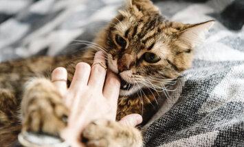 Hoia alt! Selgub, et kassi bakterid on hullemad kui tema hammustus ise