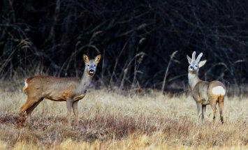 UUS! Loodusega silmitsi | Harrastusfotograaf Mati Vaus tabab kordumatuid hetki