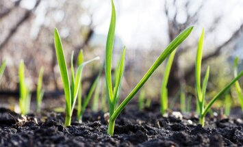 Külvame seemned parketivaiba vahele