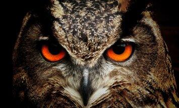 TEST: Pane end proovile! Kas sa suudad õige looma vaid tema silma järgi ära arvata?