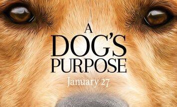"TREILER: Erakordselt armas koerafilm ""A Dog's Purpose"""