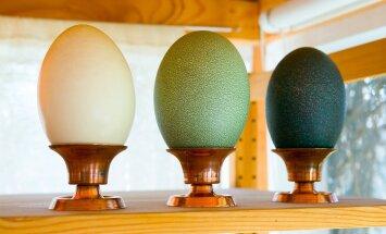Ohoo, jaanalinnumunaga võib üllatada ka munadepühal