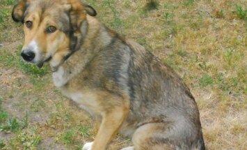 Politsei palub abi Pärnumaal koera tulistanud inimese leidmiseks
