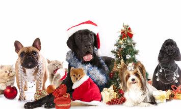 Kordamine on tarkuse ema: ohud, mis varitsevad sinu lemmikut jõulupühade ajal