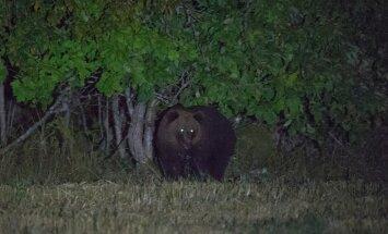 Karu tatsas põllul