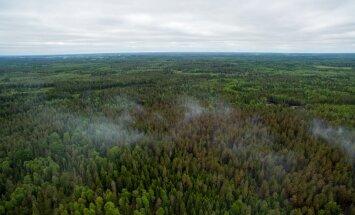 SÜNGED KAADRID: Vaata, mida nägi Eesti-Läti piiril suures metsapõlengus kahjustatud metsa kohal vaatluslendu teinud droonikaamera