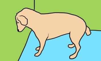Kui su lemmikloom järsku pead vastu seina surub, pöördu ruttu loomaarsti poole. Mida see kummaline käitumine tähendab?