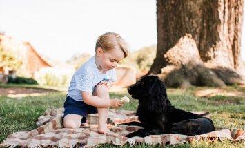 KUNINGLIK SKANDAAL! Loomasõbrad pahandavad: miks üritab prints George oma koera mürgitada?