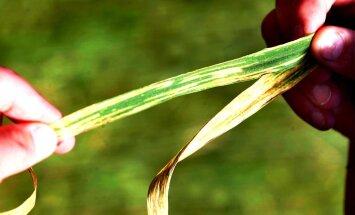 Eestis keelatakse 14 taimekaitsevahendi müük