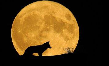 Kuidas on osad loomad võimelised nägema pilkases pimeduses?