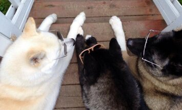 Kas koer saab aru, kui teine koer on pime?