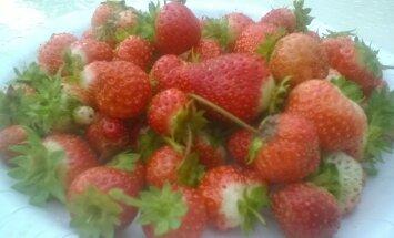 Maasikad oktoobris
