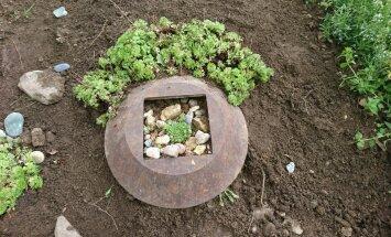 Istuta kiviktaimla taimed vanade esemete sisse