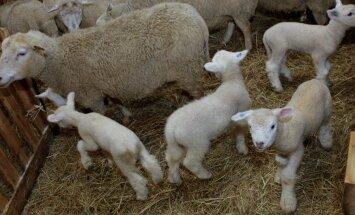 Soobasauna lambakasvatustalu