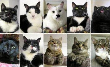 Kasside humoorikas arutelu: Miks ei ole ma koduotsivate kasside turul piisavalt atraktiivne?