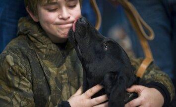 5 olulist fakti, mida sa koera sülje kohta teadma peaksid