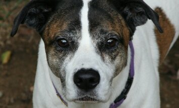 Tallinna Ringkonnakohtu otsus: Paljassaare tee hoiupaigas võib edaspidi koeri hoida