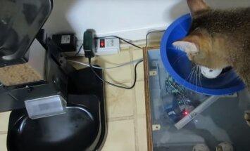 Nutikas mees ehitab kassile sööginõu, mis laseb tal õhtusöögi saamiseks jahti pidada
