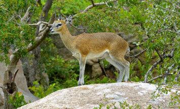 Imed loomariigis! Kaheksa looma, kellel on tõeliselt hämmastavad võimed