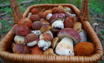 Целый холодильник грибов! Что с ними делать?