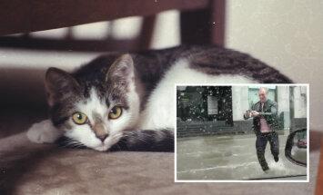 FOTOD: Kuidas läheb suvel tulvaveest päästetud unustamatul kangelasel kassipoeg Tilgal?