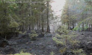 KAAMERAGA MAAL: Kuidas taastub mets tragöödiast?