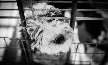 Koerapuur - kas jäle vangikong või hubane kodu?