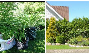 AIAHOOLIK   Õnnelik rohevahetus ja esimene aasta tõelist rahulolu oma aiaga