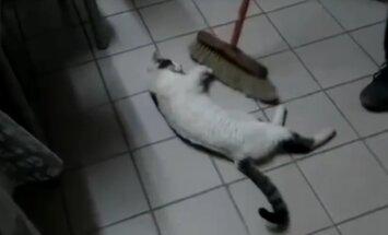Humoorikas VIDEO: Vaata, kui omapärasel viisil see kass oma meelt lahutab