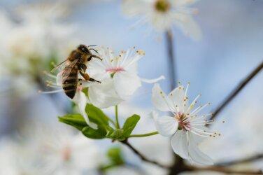 71f14d3ae0e Kui pole mesilasi, pole planeedil enam elu — seitse tõhusat viisi, kuidas  muuta oma aed mesilastele sõbralikumaks kohaks