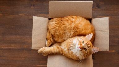 FOTOD | Miks kassidele meeldib pappkasti peitu pugeda?