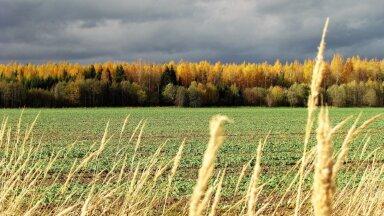 Leili metsalood | Oktoobri maastikud