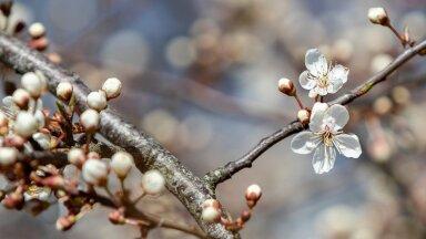 Kevademärgid looduses