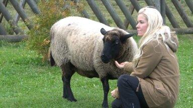 Laura Lind ja lammas Mäku